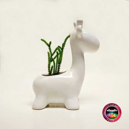 Suculenta maceta cerámica animales jirafa redonda lateral Neea Flora