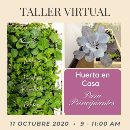 Taller virtual huerta en casa 11 octubre - Neea Flora