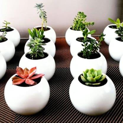 Recordatorios para empresas plantas suculentas cerámica pintada a mano Neea Flora