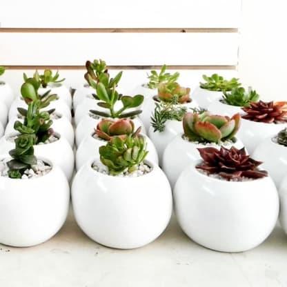 Recordatorios para eventos empresariales plantas suculentas cerámica pintada a mano Neea Flora
