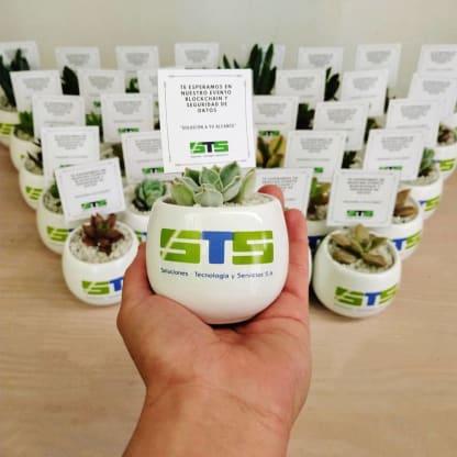 Regalos empresariales ecológicos plantas suculentas cerámica con logotipo branding Neea Flora