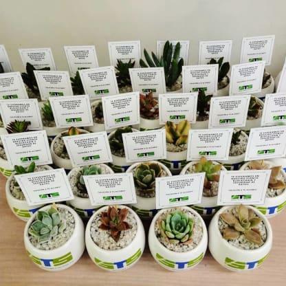 Regalos+empresariales+personalizados+suculentas+matera+cer%C3%A1mica+esmaltada+logotipo+horneado+Neea+Flora