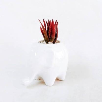 Regalos empresariales ecológicos plantas suculentas macetas cerámica elefante Neea Flora