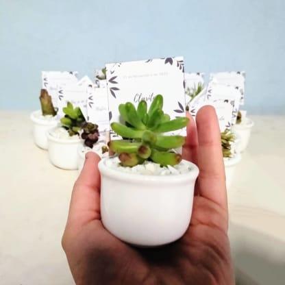 Recordatorios suculentas maceta cerámica ponchitas 4x5cm