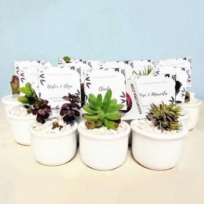 Suculentas para regalar en bodas matera cerámica esmaltada ponchitas 4x5cm
