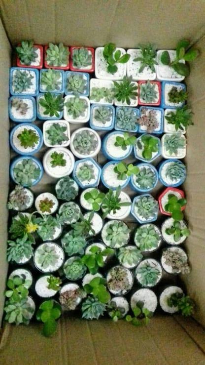 Regalos empresariales plantas suculentas macetas cerámica vidrio Neea Flora