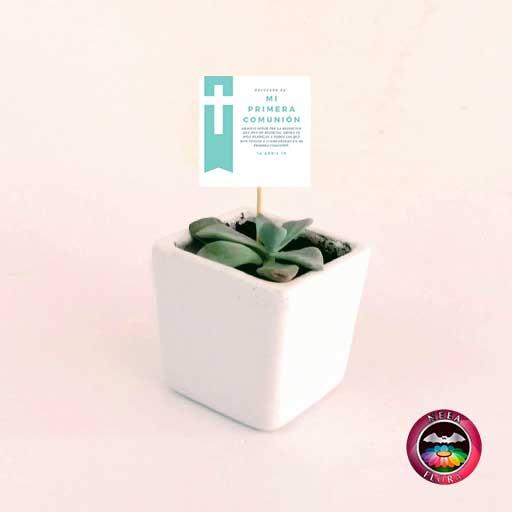 Suculentas recordatorios matera cerámica resinada cubo blanco con tarjeta Neea Flora