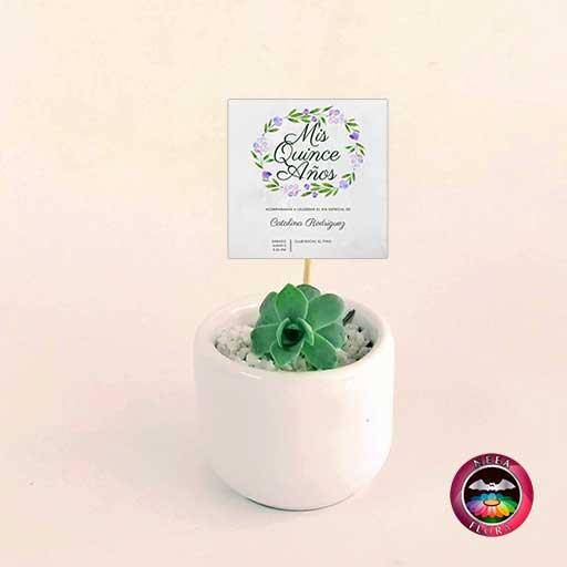 Suculentas recordatorios matera cerámica ponchera 5x4cm blanca con tarjeta Neea Flora