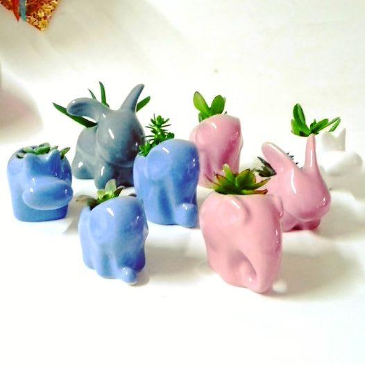 Regalos corporativos amor y amistad Suculentas cerámica animales Neea Flora