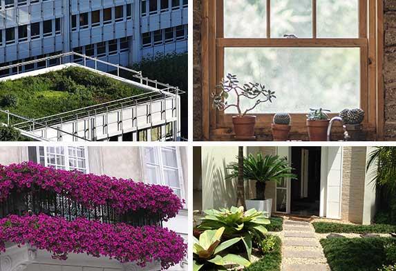 Post-ideas-para-hacer-un-jardín-Jardines en azoteas y techos Jardines de Ventanas Jardines de balcones Jardines de entrada casas. Neea-Flora