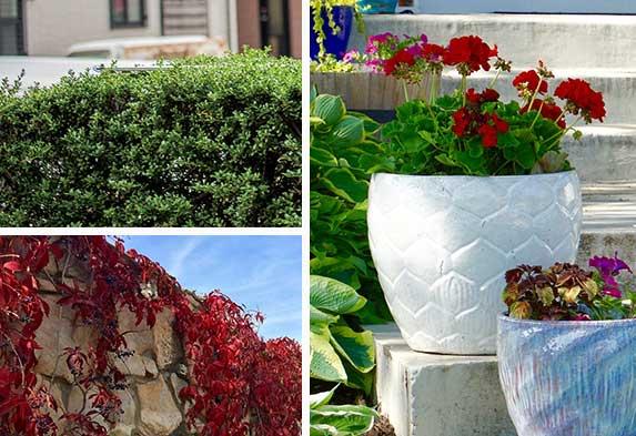 Post ideas para hacer un jardín Cercas Vivas Jardines de Rocalla Jardines de Patios y Terrazas. Neea-flora