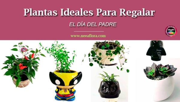 Plantas para regalar el día del padre Neea Flora