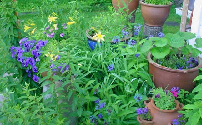 Varias plantas en macetas distintas