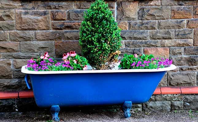 Cómo combinar varias plantas en una maceta - Plantas bañera