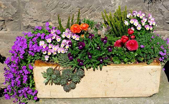 Varias plantas en una maceta jardinera