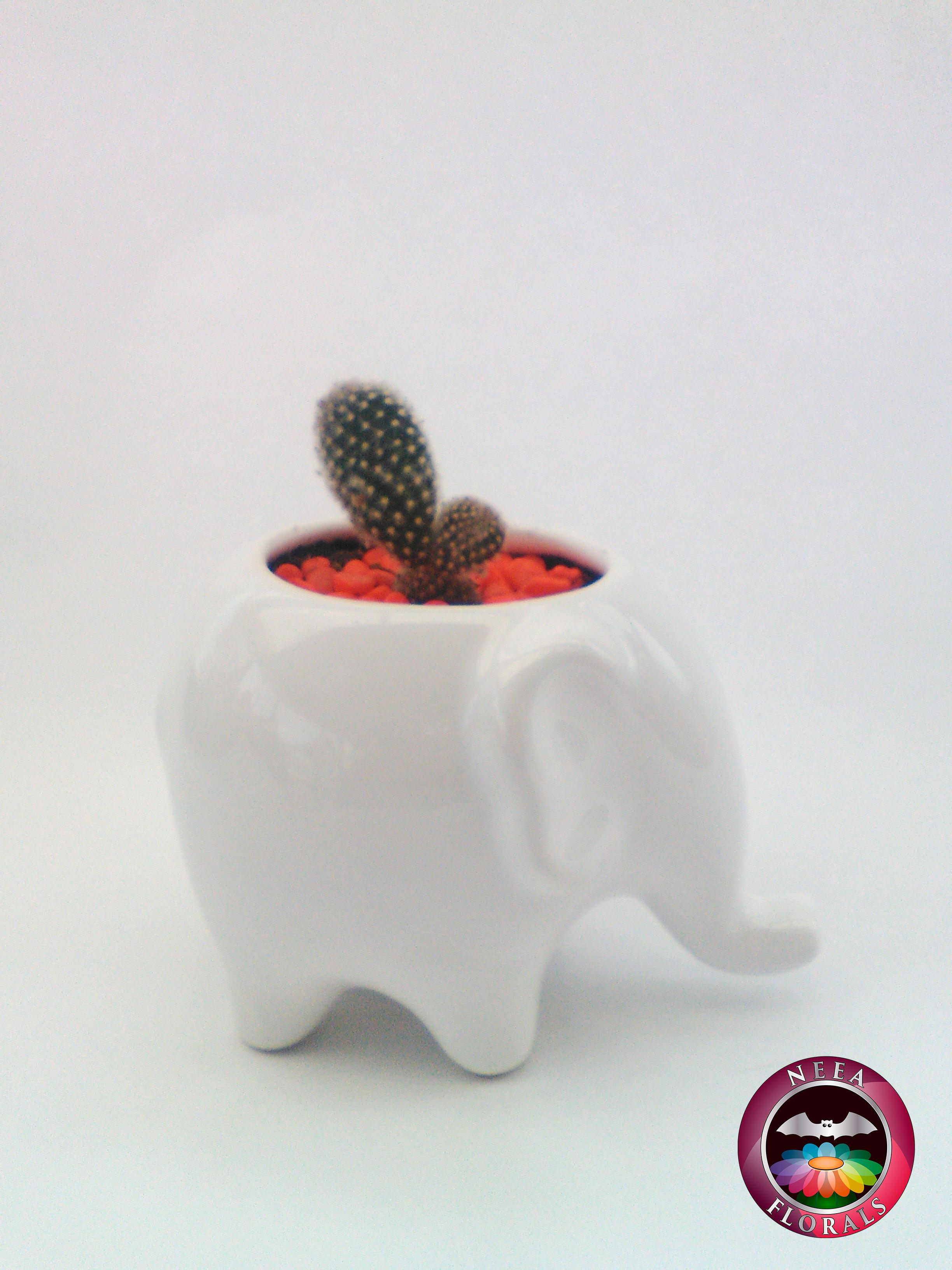 Cactus Blanco en Matera de Cerámica Blanca con forma de Elefante. Catálogo Neea Florals