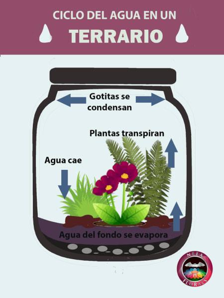 Qué es un terrario y cómo funciona un terrario. Ciclo del agua en un terrario. Neea Flora