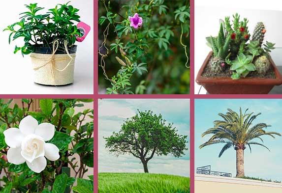 Tipos de plantas ornamentales según su hábito. (izquierda arriba) hierba; (centro arriba) planta enredadera o trepadora; (derecha arriba) cactus y suculentas; (izquierda abajo) arbusto; (centro abajo) Árbol; (Derecha abajo) Palma.