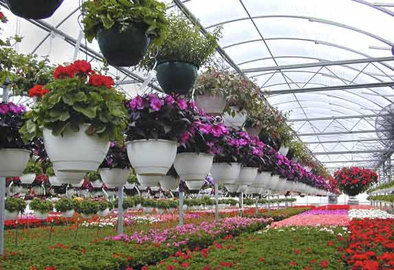 Diferencia jardinería y floricultura
