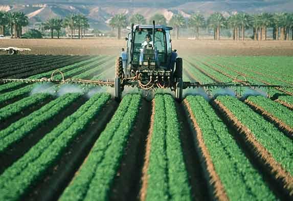 Diferencia jardinería y agricultura
