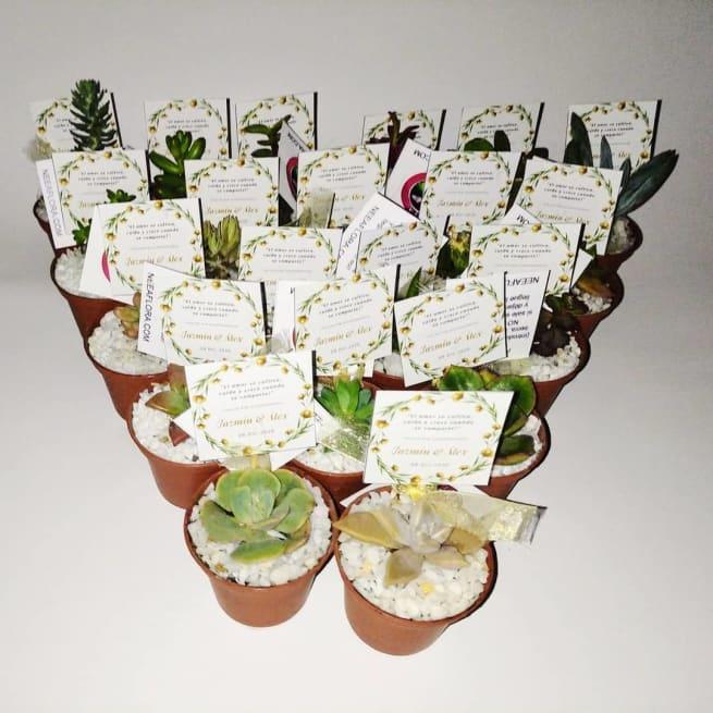 Regalos empresariales ecológicos suculentas materas plásticas P5 Neea Flora