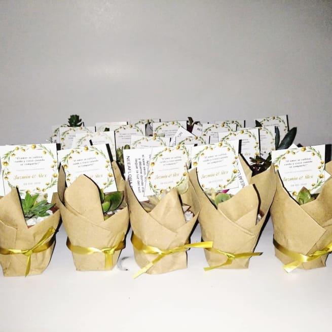 Suculentas para regalar bogotá maceta plástica P5 papel Neea Flora