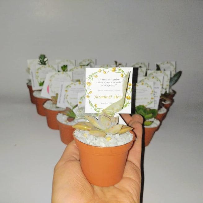 Suculentas ideas para regalar materas plásticas Neea Flora