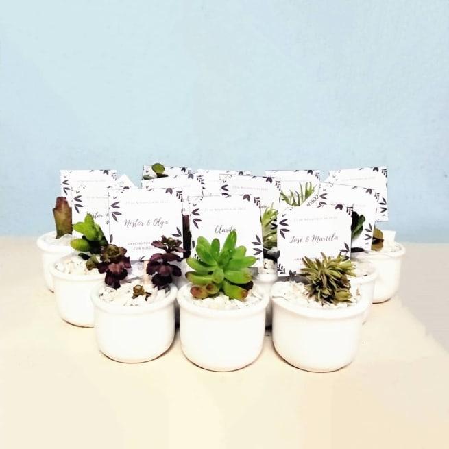 Suculentas para recordatorios macetas cerámica esmaltada ponchitas 4x5cm