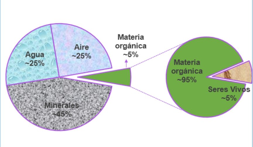 ¿qué es el suelo? Componentes del suelo según su proporción. Blog Neea Flora