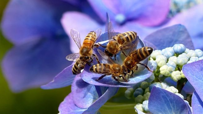 Méhek világnapja - Bertalan Balázs