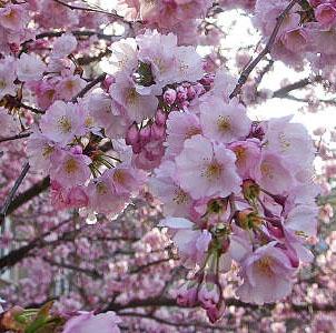 gyümölcsfa-virág | Mézek - BERTALAN MÉZ | Nektár a kaptárban - élet a mézben!