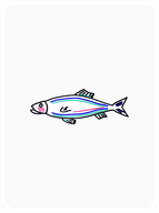 Spiffy Salmon