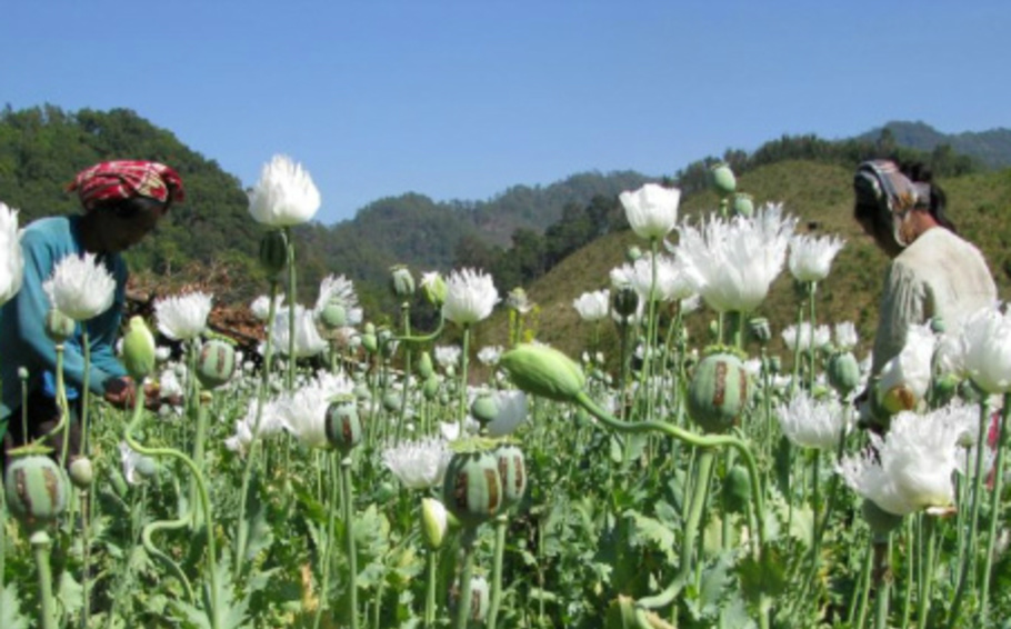 เวทีประชุมครั้งแรกของผู้ปลูกพืชที่ถูกประกาศว่าผิดกฎหมายในเอเชียตะวันออกเฉียงใต้