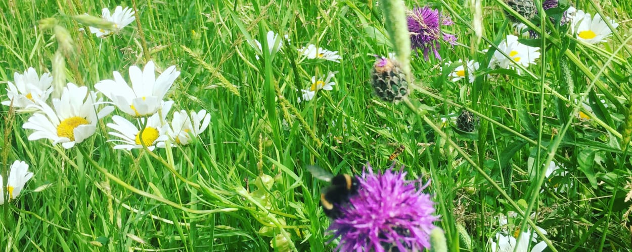 Beautiful wildflower meadow for pollenation by the bees