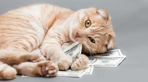 Cat with hundred dollar bills