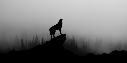Wolf Howling at the Moon - It's scary out there