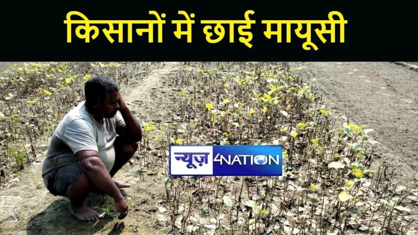 गया में बारिश की वजह से लाखों की फसल बर्बाद, किसानों में छाई मायूसी