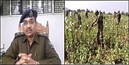 वन विभाग की कई एकड़ जमीन पर नक्सली कर रहे थे अफीम की खेती, पुलिस ने जेसीबी से किया नष्ट