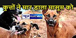 खेत जा रही मासूम हुई आदमखोर कुत्तों की दरिंदगी का शिकार, नोंचकर मार डाला