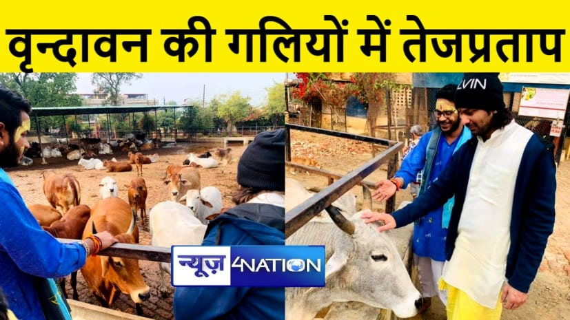 नए साल में वृन्दावन में गायों की सेवा करते नजर आये तेजप्रताप यादव, पढ़िए पूरी खबर