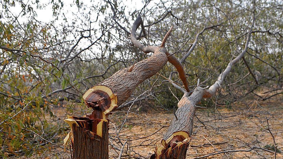 trees-chopping_h5ltob.jpg