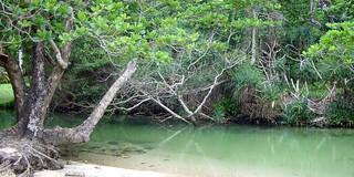 Mangroves-Images-1_rddx0l.jpg