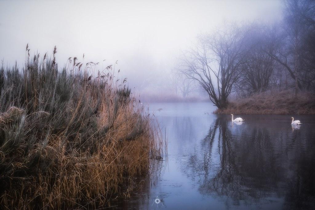 Holding-Ponds-Image_wkblny.jpg
