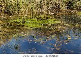 Dirty-Ponds-Images-1_ywxnx8.jpg