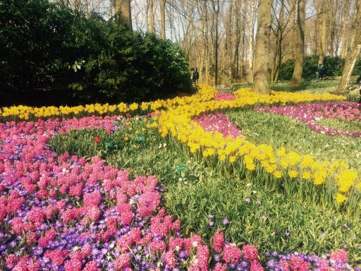 A forest carpeted with pink and yellow tulips
