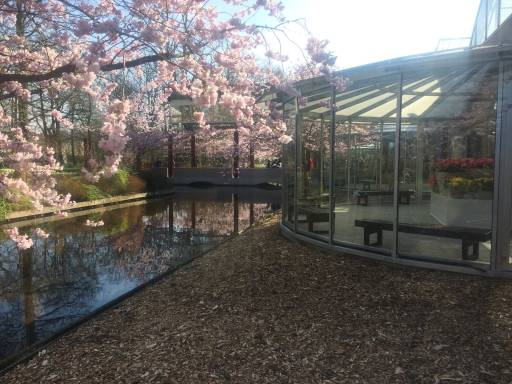 A glass gazebo next to a canal under a blossoming cherry tree