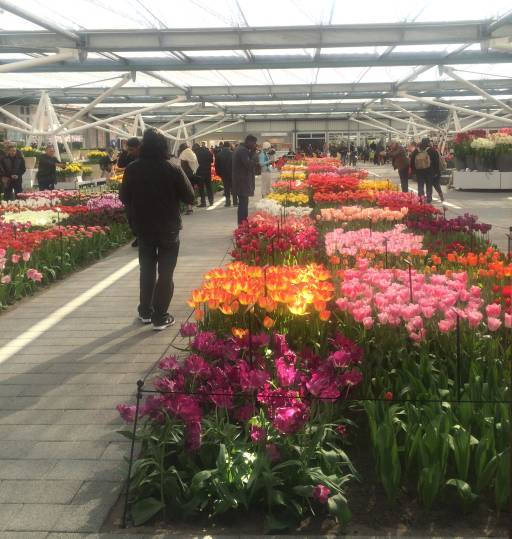 Rows upon rows of tulips cross the Willem-Alexander Pavilion