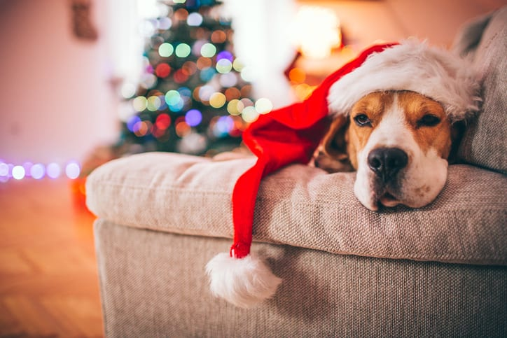 Tired Beagle Santa