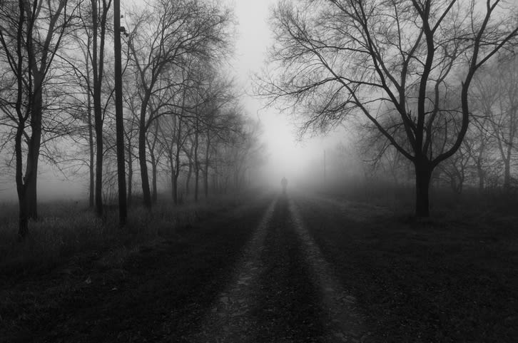 misty country path