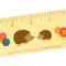 Hazel Hedgehog • Ruler: Front